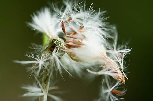 Unsere gesunde Natur - ©Mili Flener