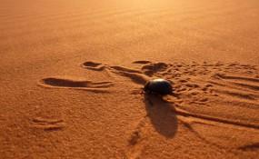 Scarabée dans le désert du Sahara - ©https://www.flickr.com/photos/axelrd